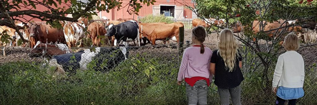 Barn tittar på kor